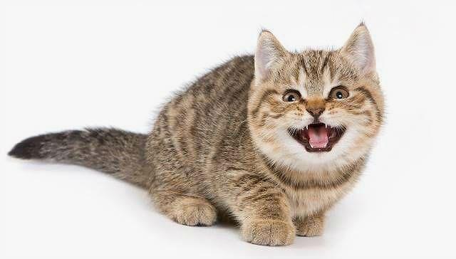 Глисты у домашнего кота - признаки