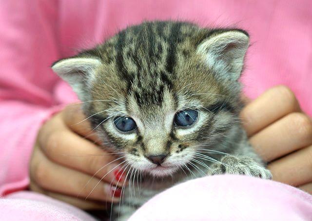 Заражение человека глистами от кошки через поглаживание