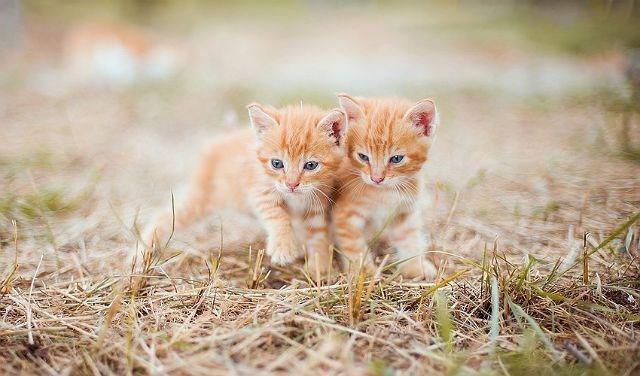 Иностранные клички для рыжих котят