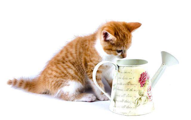 Клички для рыжих котят девочек