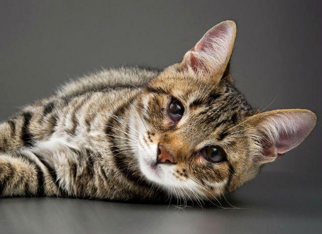 Больные глаза у кошки