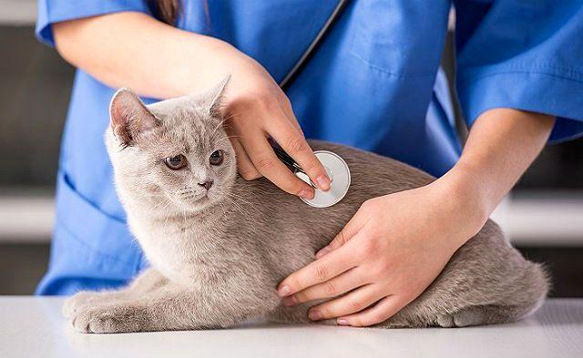 Кот покакал с кровью - помощь ветеринара