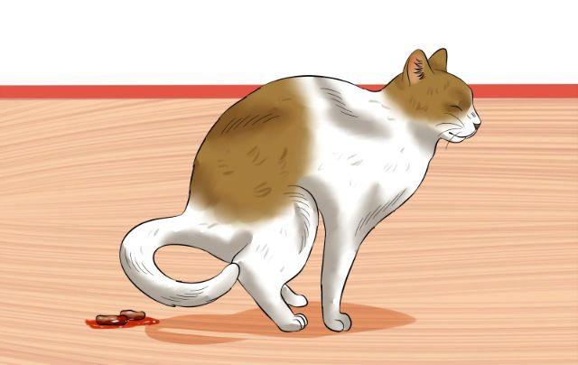 Кот какает с кровью