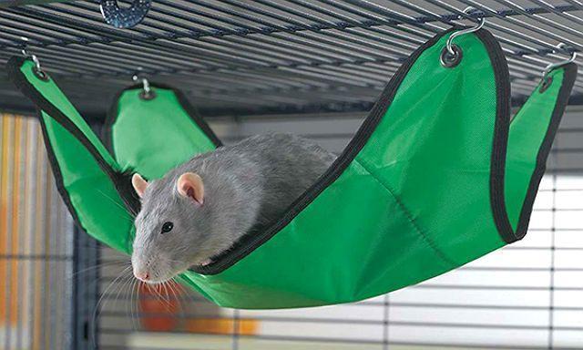 Декоративная крыса в гамаке