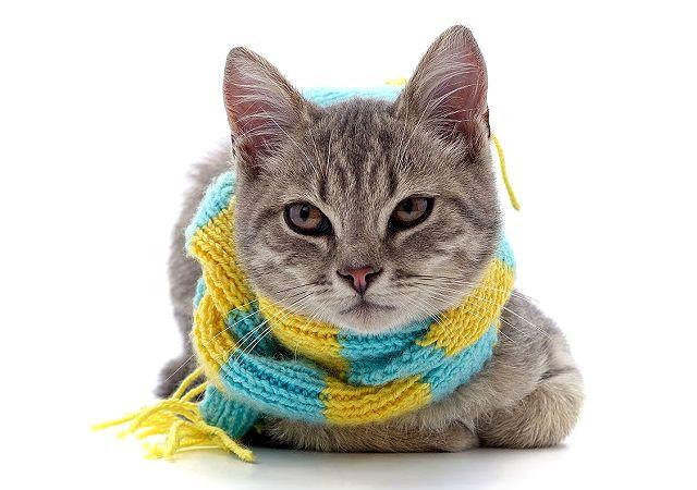 Кошка простудилась