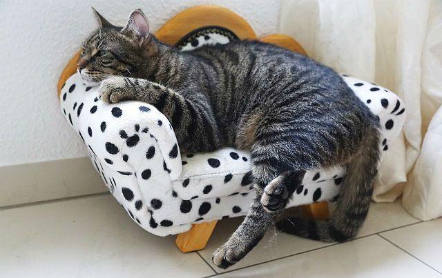 Простуда у кошки - профилактика