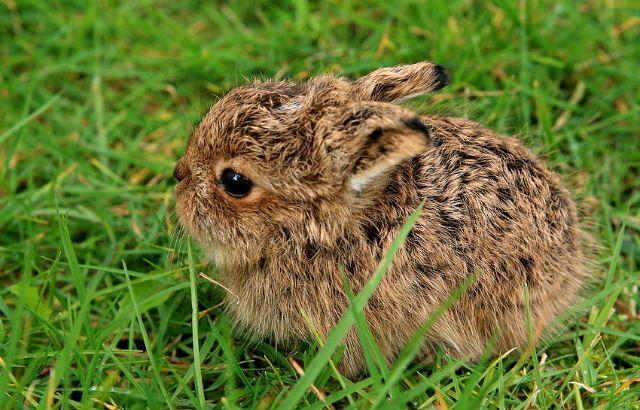 Зайчонок к траве
