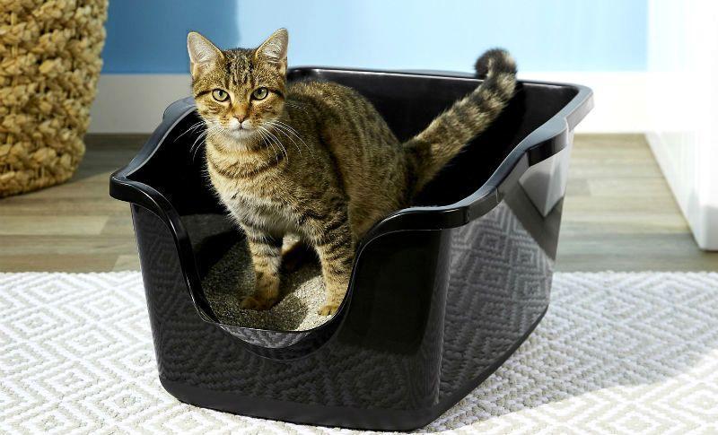 Cлабительное для котят и кошек