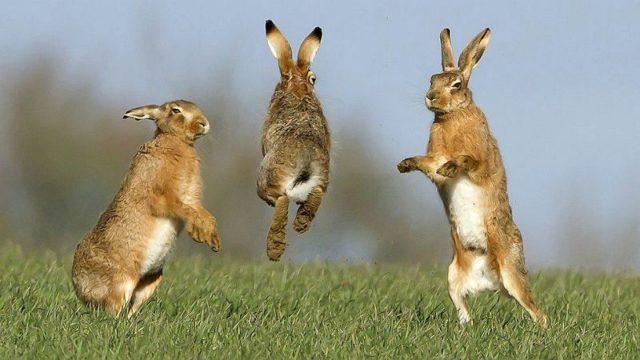 Степной заяц - главное фото