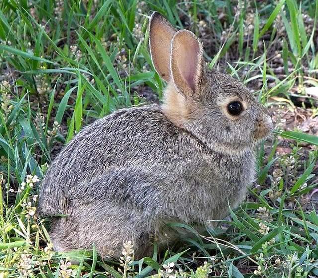 Степной заяц - среда обитания