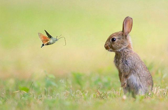 Зайчонок русак