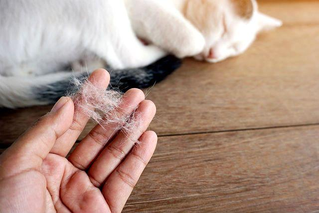 У кошки выпадает шерсть клоками