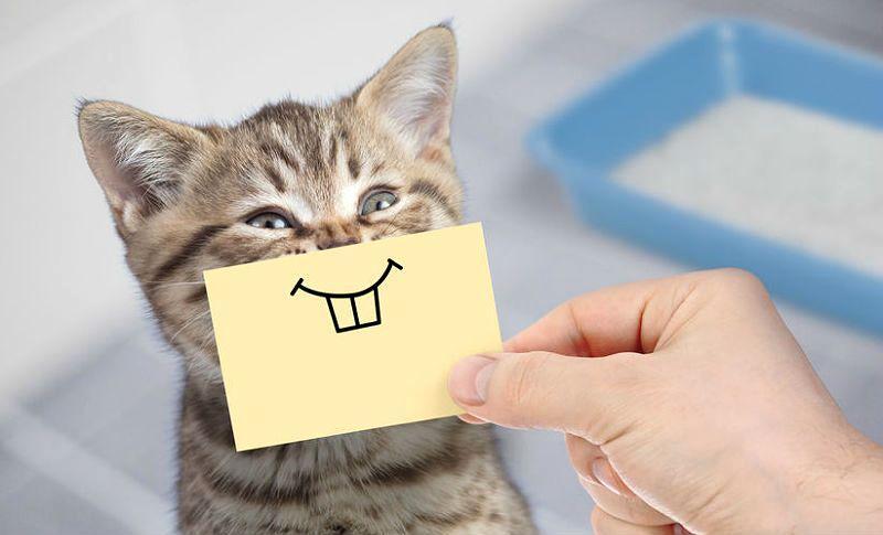 У котенка меняются зубки