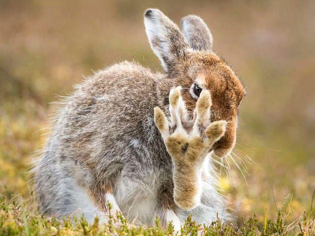 Жизнь зайцев в природе