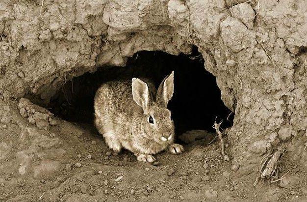 Где живет заяц