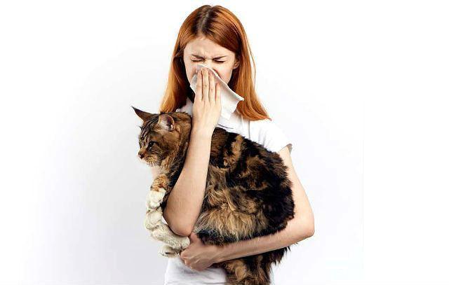 Аллергия на мейн-куна