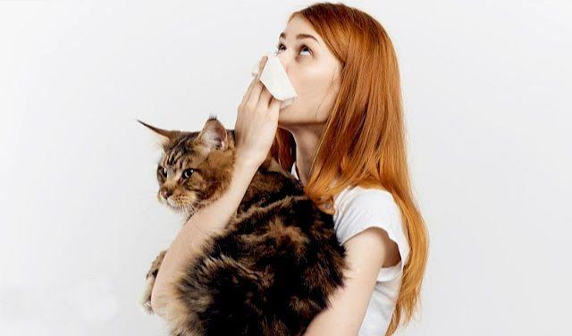 Аллергия на кошку мейн-кун