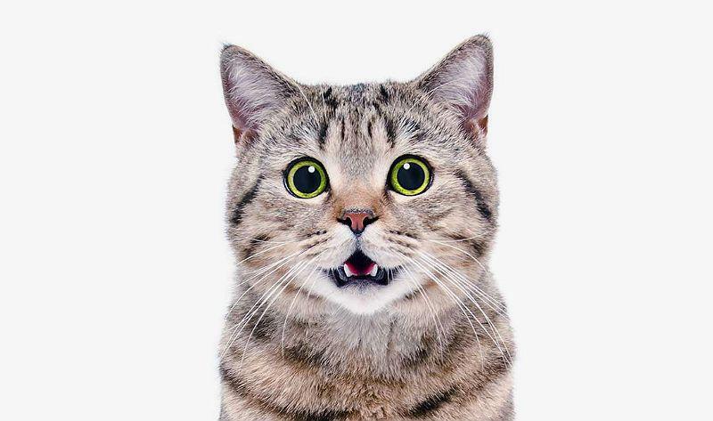Как помочь кошке отрыгнуть шерсть