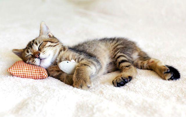 Котенок часто дышит животом