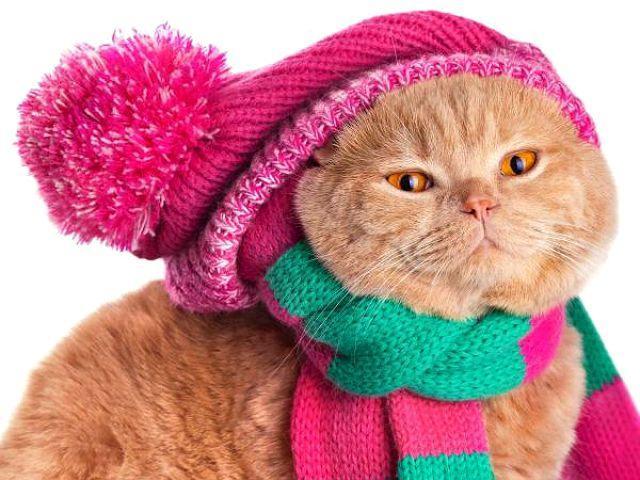 Кошка часто дышит животом - простуда