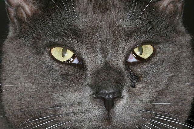 Пленка на глазах у кошек - причины