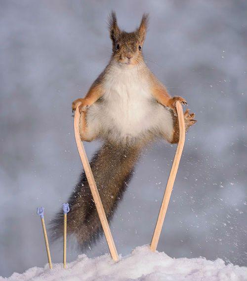Активность белки зимой