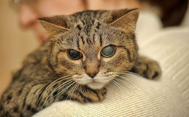 Помутнение глаза у кошки