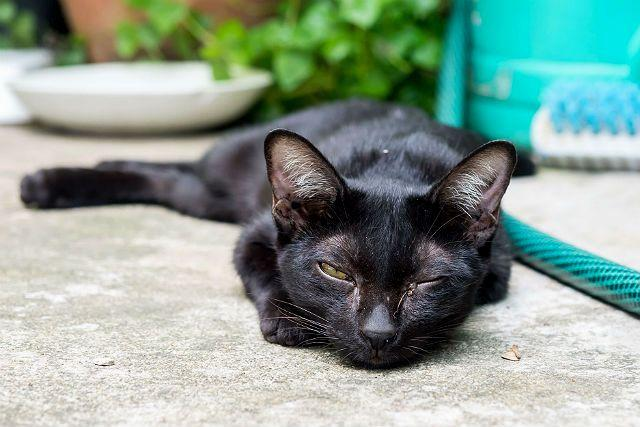 Вирусный ринит у кошки