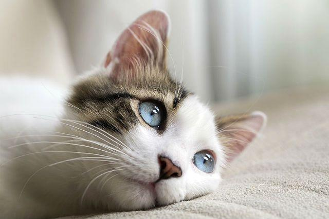 Ринит - опасность для кошек