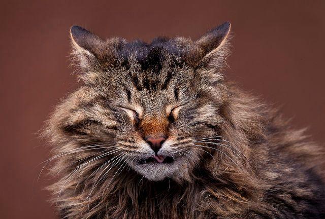 Ринит у кошки бактериального происхождения