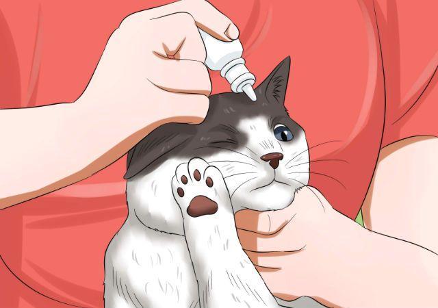 У кошки проблемы с третьим веком - лечение