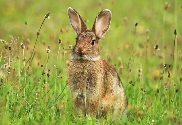 Дикие кролики - главное фото