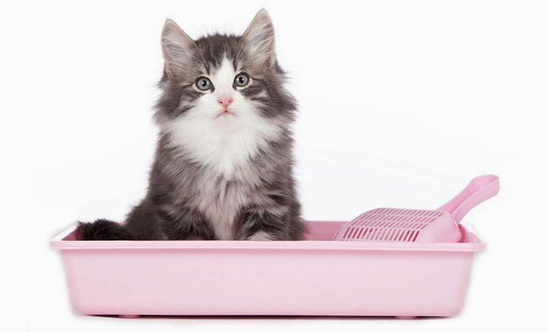 Как вылечить понос у котенка - главное фото