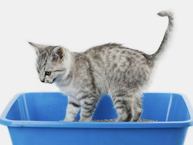 Понос у котенка - причины