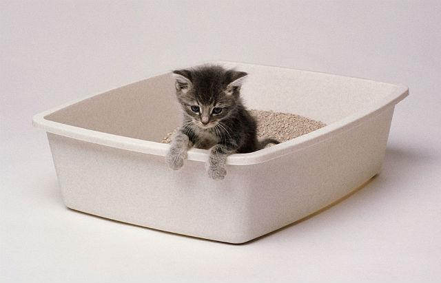 У котенка - понос