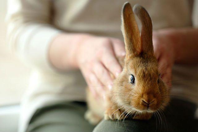 Кастрация кроликов - плюсы
