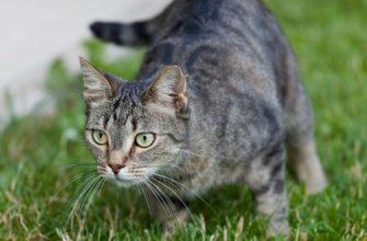 Клещ на кошке - главное фото