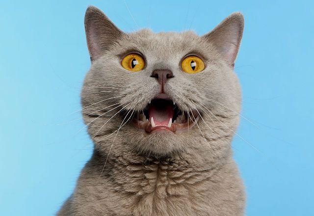 Кошка дышит ртом - болезнь сердца