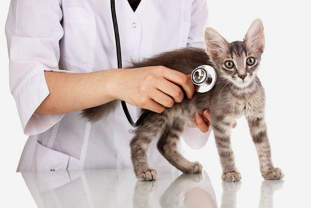 Кошка дышит ртом - помощь ветеринара