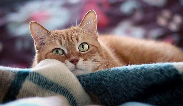Кошка дышит ртом - лечение и прогноз