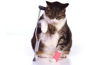 Кошка сломала лапу - главное фото