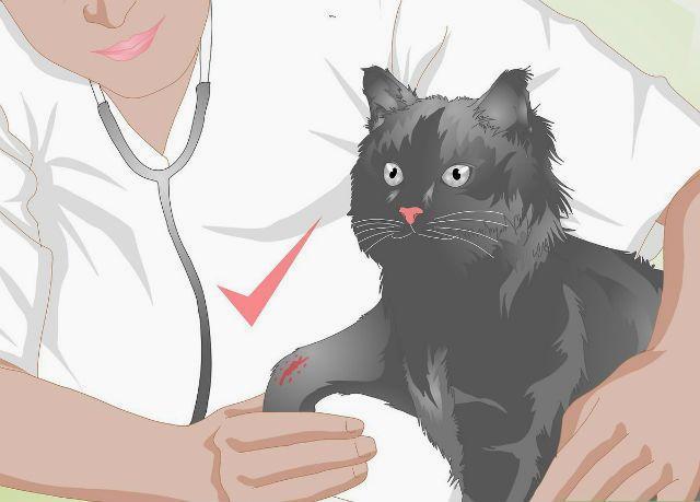 Открытый перелом лапы у кошки