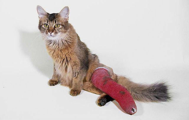 Кошка сломала лапу - реабилитация