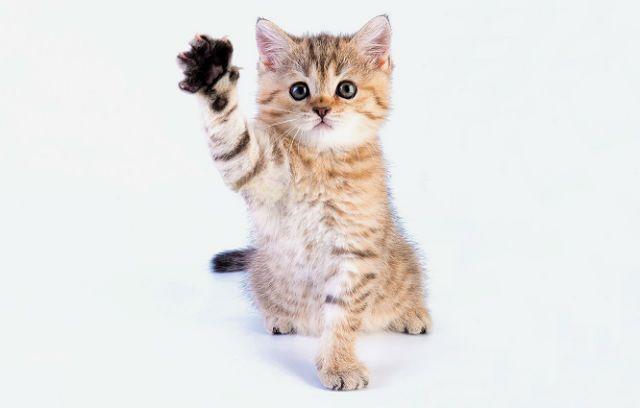 Кошка сломала лапу-1