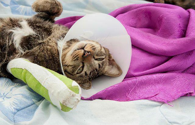 Кошка сломала лапу - послеоперационный уход