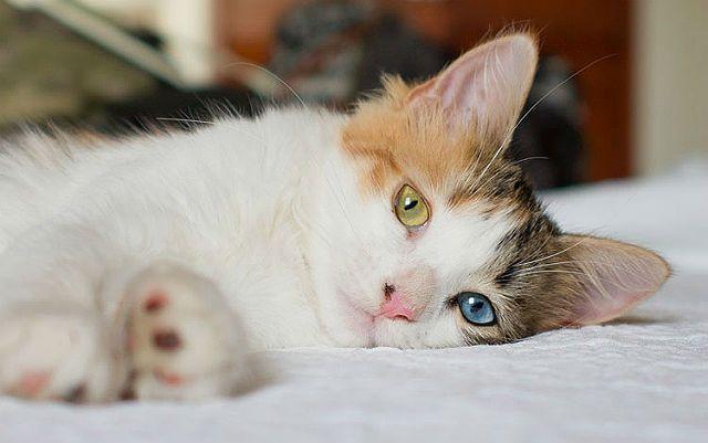 Кошки с разного цвета глазами - выбор клички