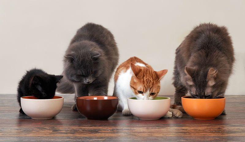 Кошку рвет после еды - главное фото
