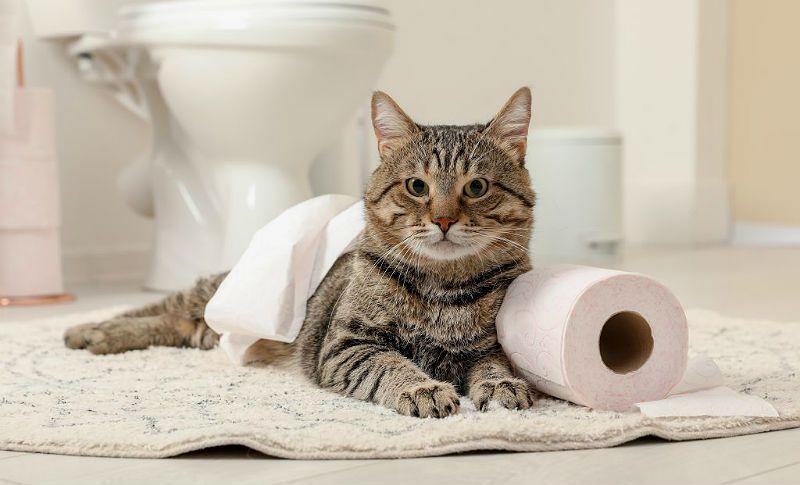 Кот часто ходит в туалет - главное фото