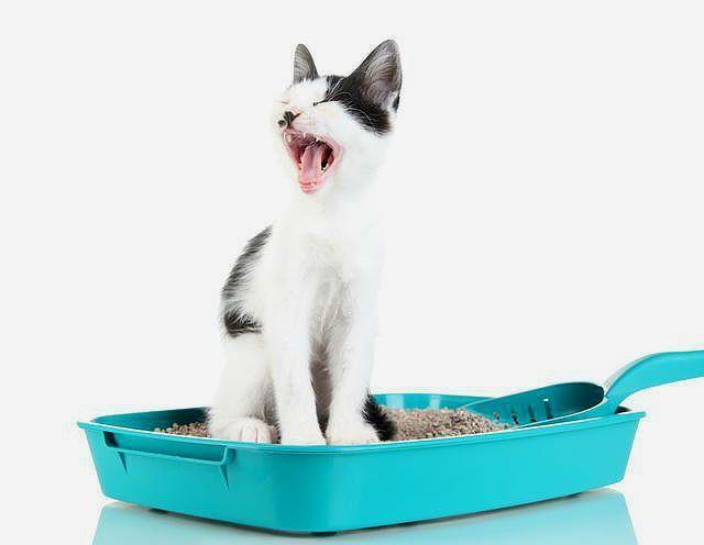 Кот часто ходит в туалет - тревожные симптомы