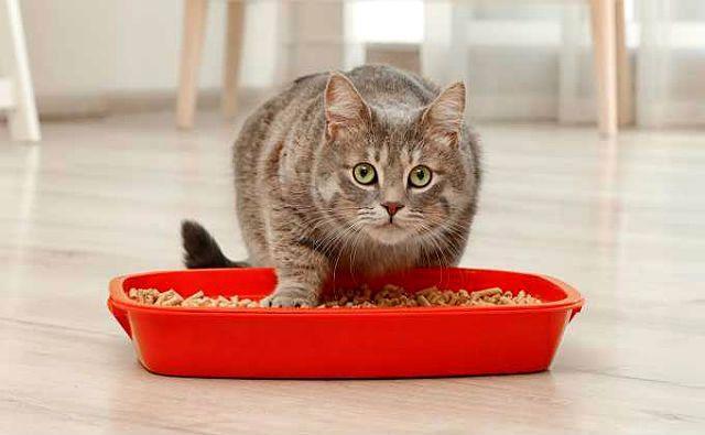Кот часто ходит в туалет по-маленькому